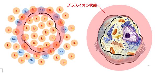 痛んだ細胞