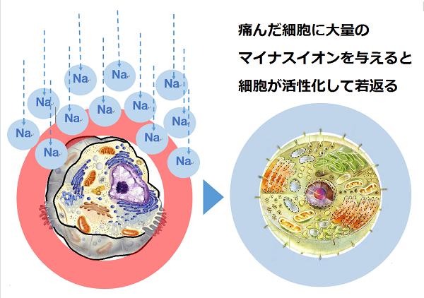 細胞の変化