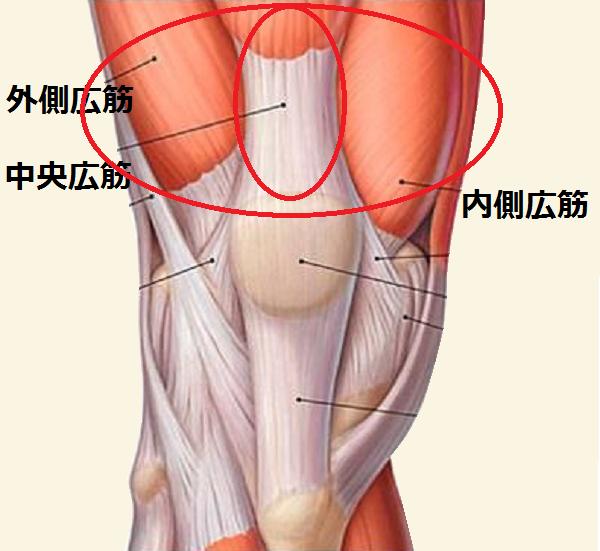 痛くて正座が場合の損傷筋肉