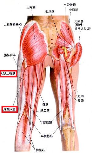 膝裏から太腿裏側の筋肉