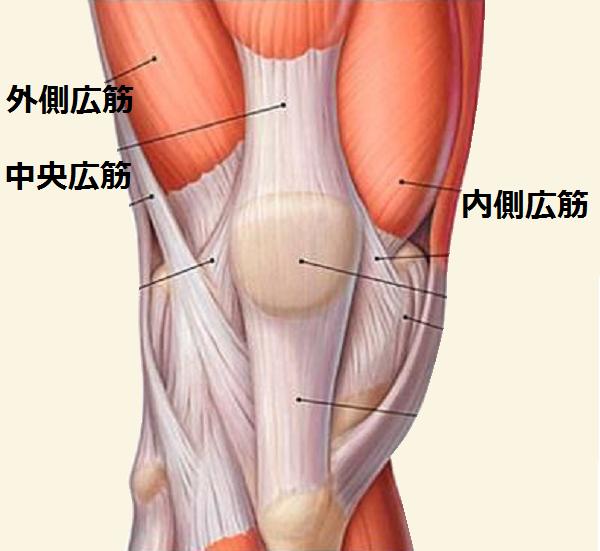 膝(皿)の周りの筋肉